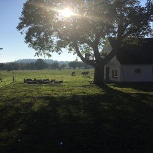 vandretur_familie_enlige_born_langeland_shelter_natur_Hønsebjerggård_shelterplads_bålplads