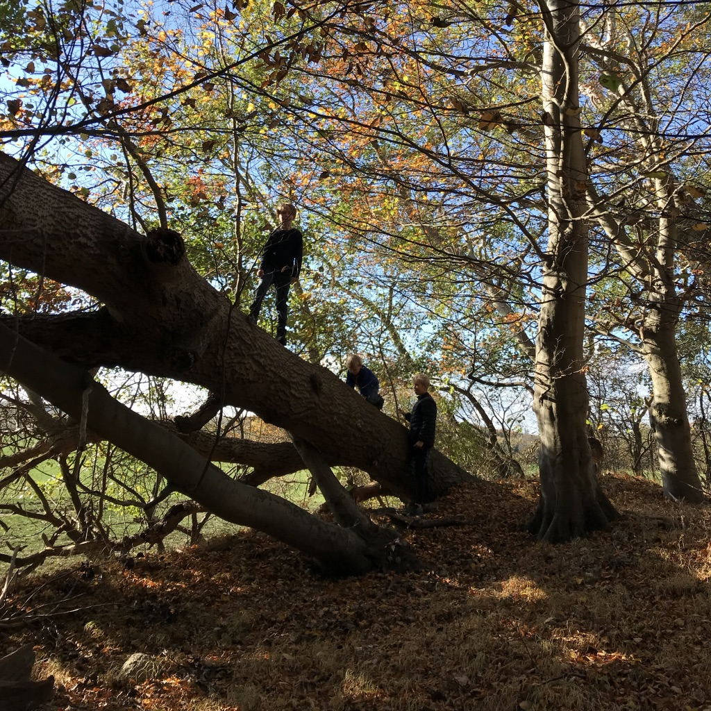 skov, træ, klatre