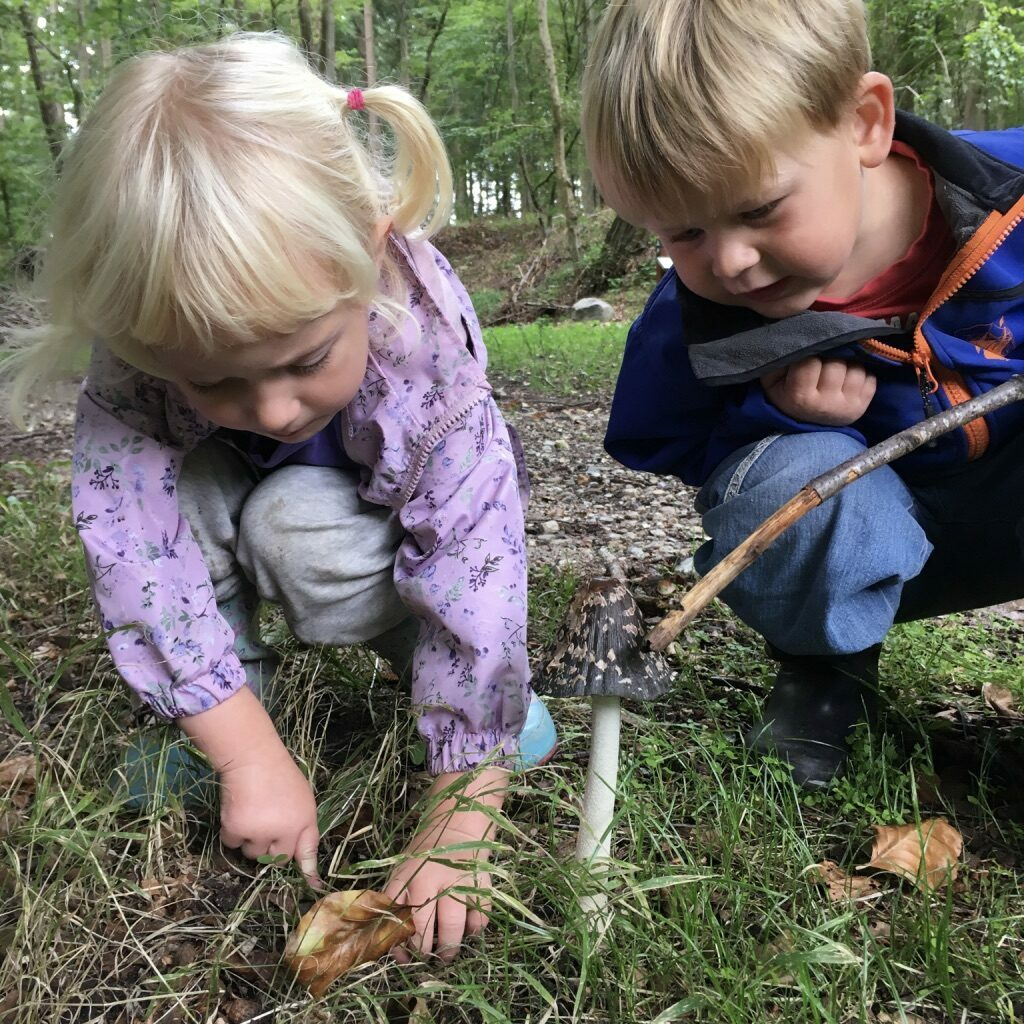 Verdens_bedste_ferie, børneferie, svampe, efterår, nysgerrighed, skov, skovtur, vandre, gåtur, billig_ferie, bæredygtig_ferie, klimavenlig_ferie, klimavenlig_ferie_i_danmark