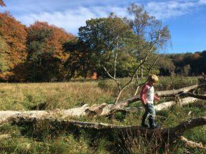 børn, efterår, motorik, udforske_natur, aktiv_ferie_med_børn_i_danmark, aktiv_ferie_i_danmark